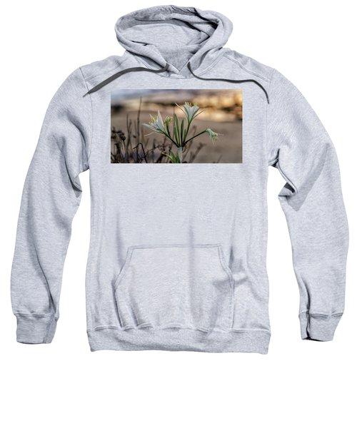 Pancratium Maritimum L. Sweatshirt