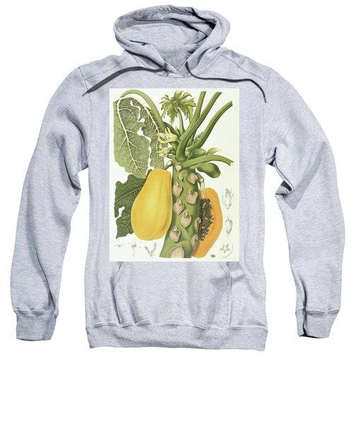 Papaya Sweatshirt by Berthe Hoola van Nooten