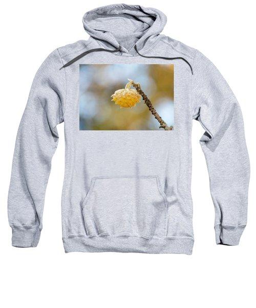 Paperbush Flower Sweatshirt