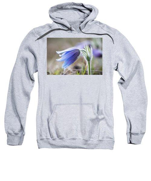 Pasque Flower's Silver Grey Hair Sweatshirt