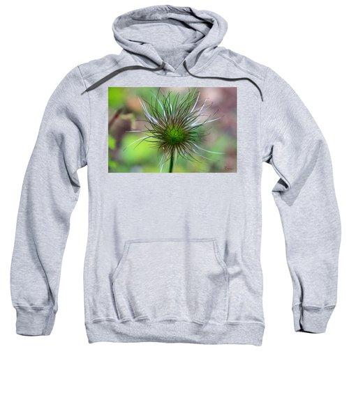 Pasque Fluff Sweatshirt