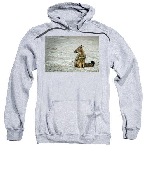 Patagonia Fox - Argentina Sweatshirt