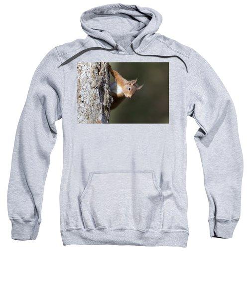 Peekaboo - Red Squirrel #29 Sweatshirt