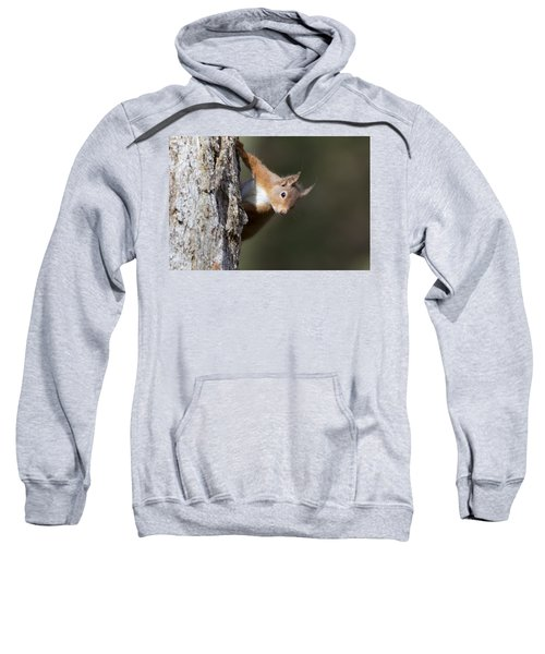 Peekaboo - Red Squirrel #29 Sweatshirt