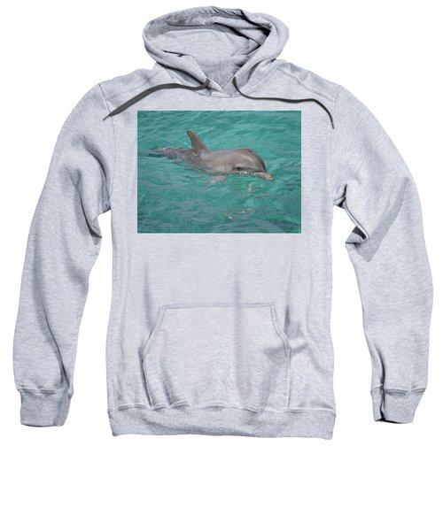 Peeking Dolphin Sweatshirt