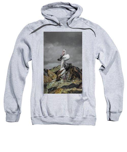 Pelicans On Rocks Sweatshirt