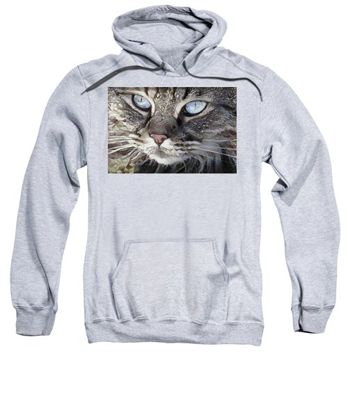 Perry The Persian Cat Sweatshirt