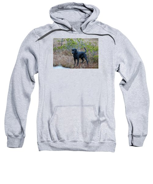 Pet Portrait - Radar Sweatshirt