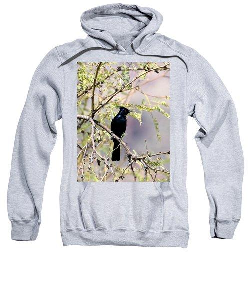 Phainopepla Black Cardinal Sweatshirt