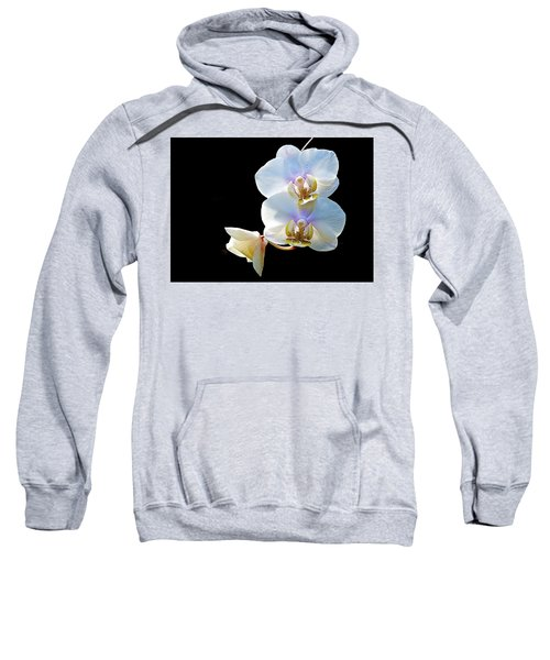 Phalaenopsis Culican #1 Nobby's Amy Shin Hua Sweatshirt