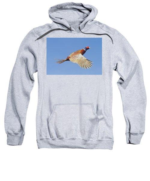 Pheasant Wings Sweatshirt