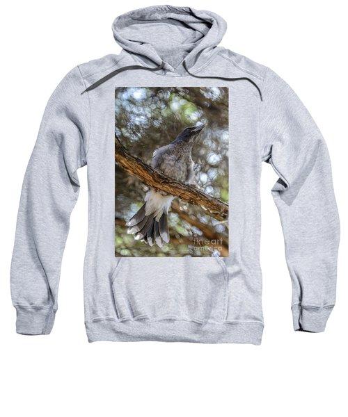 Pied Currawong Chick 1 Sweatshirt