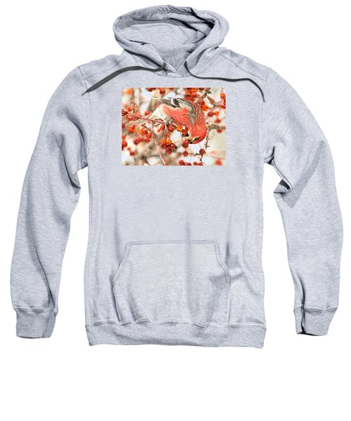 Pine Grosbeak Sweatshirt