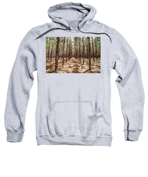 Pine Plantation Wide Color Sweatshirt