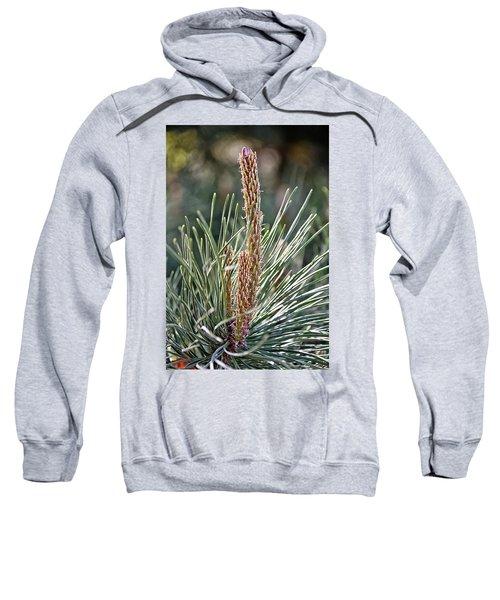 Pine Shoots Sweatshirt