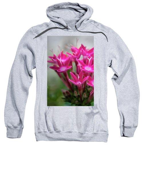 Pink Blossoms Sweatshirt