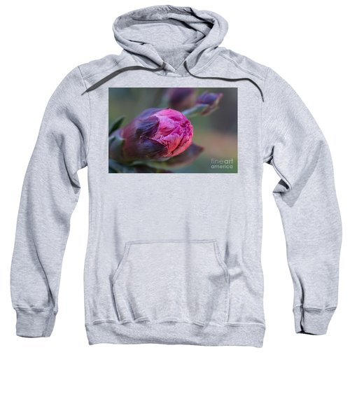 Pink Carnation Bud Close-up Sweatshirt