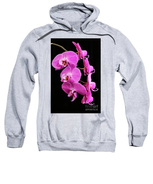 Pink Orchid With Black Background Sweatshirt