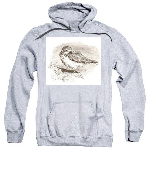 Piping Plover Sweatshirt
