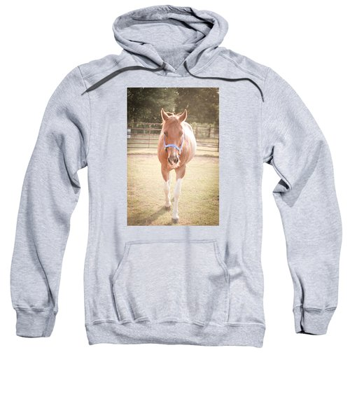 Portrait Of A Light Brown Horse In A Pasture Sweatshirt