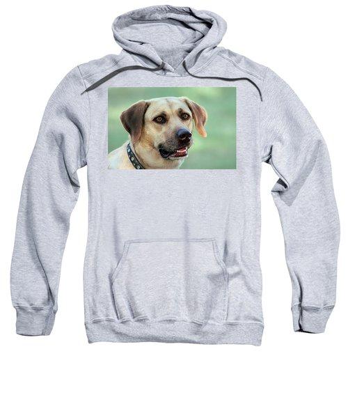 Portrait Of A Yellow Labrador Retriever Sweatshirt