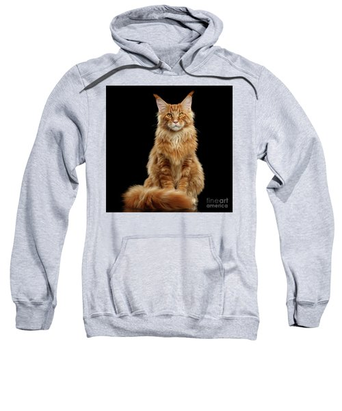 Portrait Of Ginger Maine Coon Cat Isolated On Black Background Sweatshirt