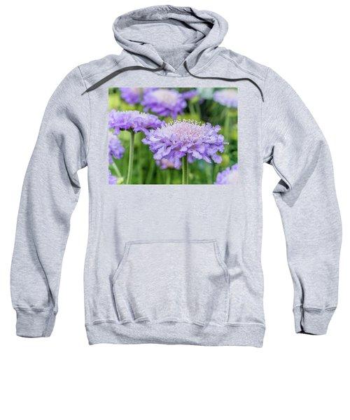 Pretty Purple Sweatshirt