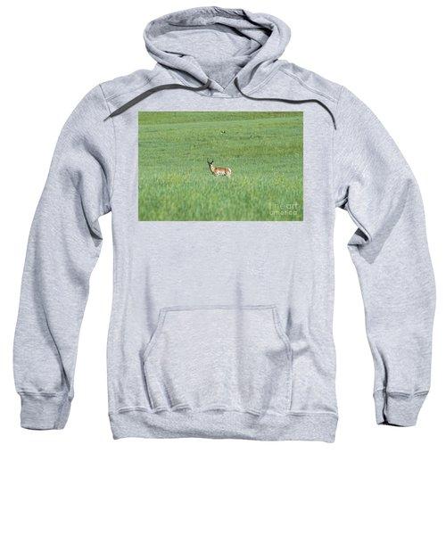 Pronghorn In A Sea Of Green Sweatshirt