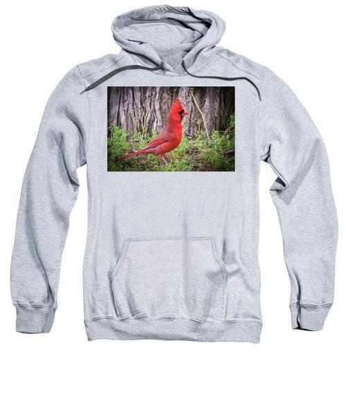 Proud Cardinal Sweatshirt