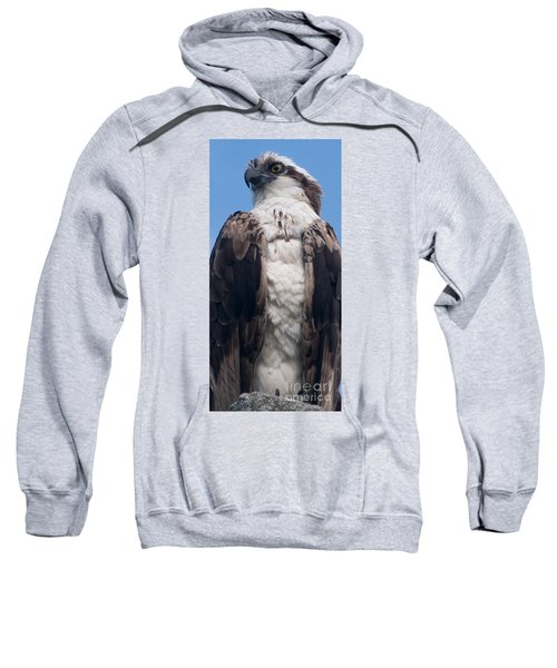 Proud Hawk Sweatshirt