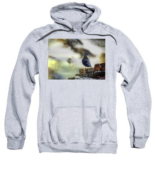 Proud To Be A Pigeon Sweatshirt