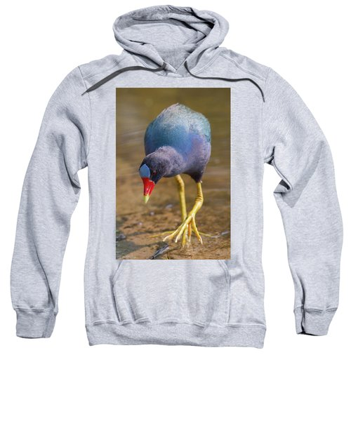 Purple Gallinule Bigfoot Sweatshirt