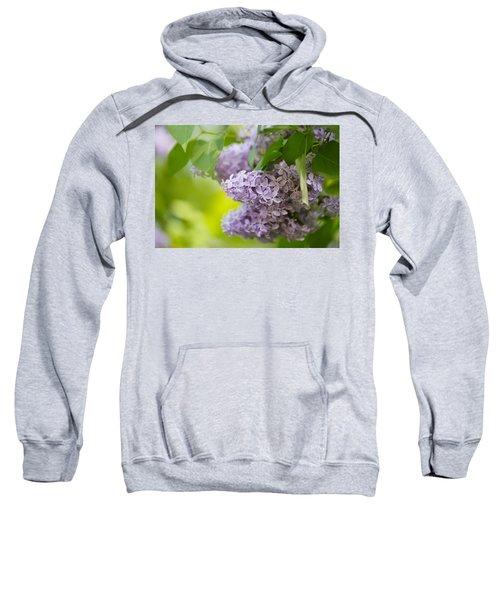 Purple Lilac Sweatshirt