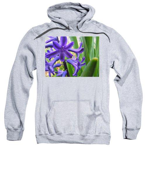 Purple Spring Sweatshirt