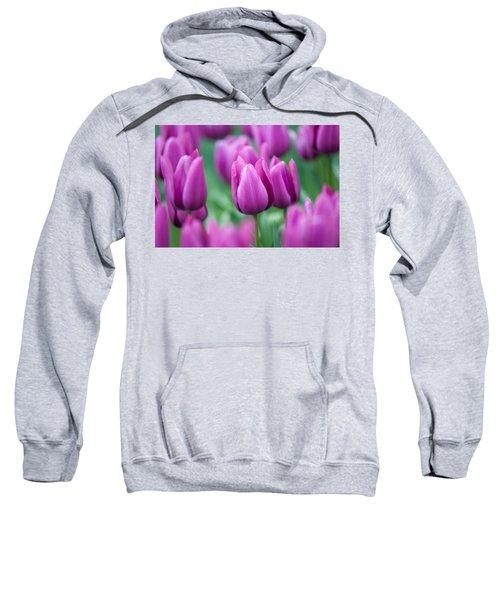 Purple Tulips Of Keukenhof Sweatshirt
