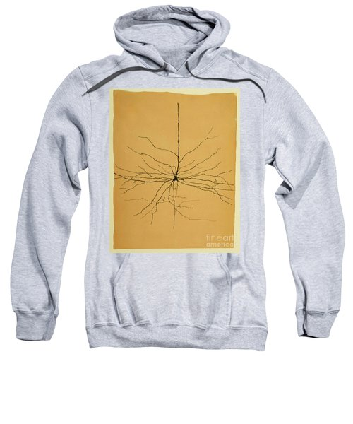 Pyramidal Cell In Cerebral Cortex, Cajal Sweatshirt