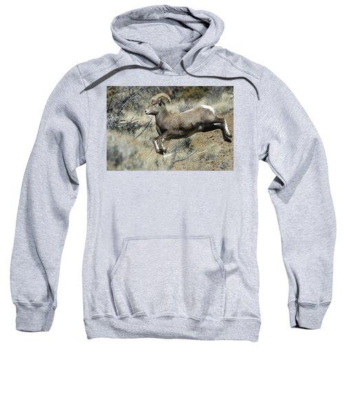 Ram In A Hurry Sweatshirt