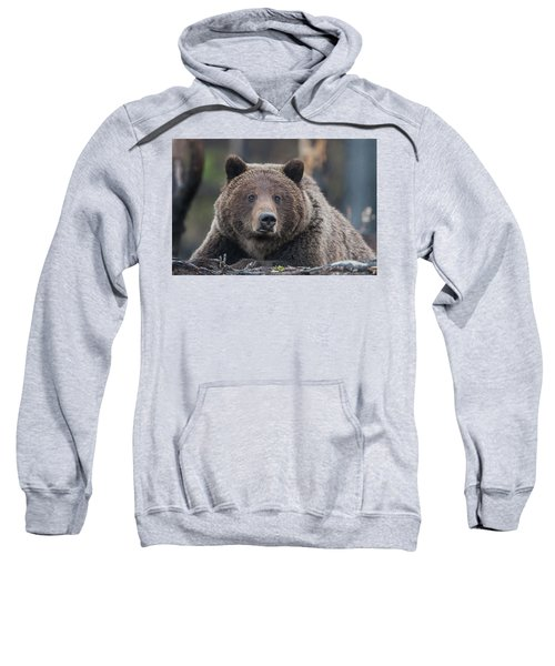 Raw, Rugged And Wild- Grizzly Sweatshirt