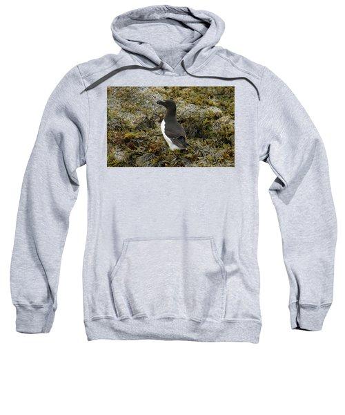 Razorbill Sweatshirt by Judd Nathan