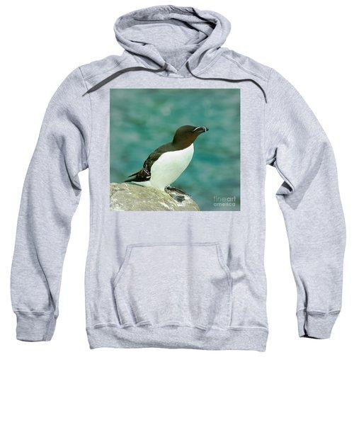 Razorbill Sweatshirt