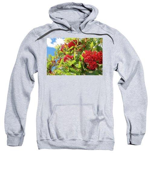 Red Berries, Blue Skies Sweatshirt