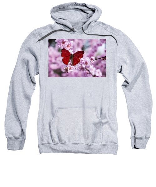 Red Butterfly On Plum  Blossom Branch Sweatshirt