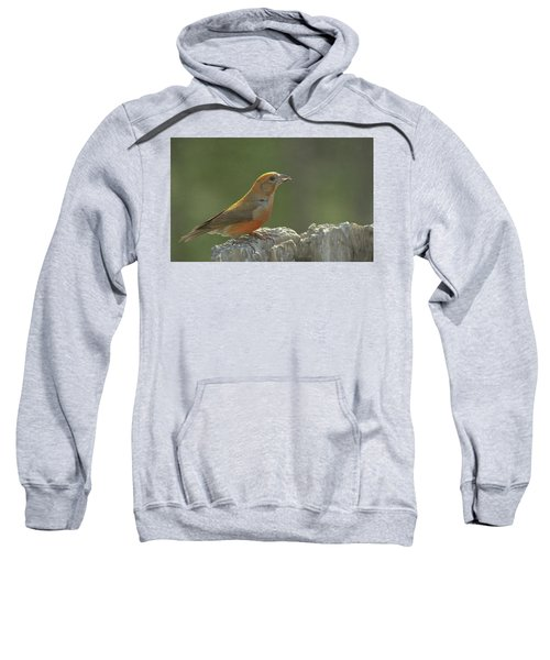 Red Crossbill Sweatshirt by Constance Puttkemery