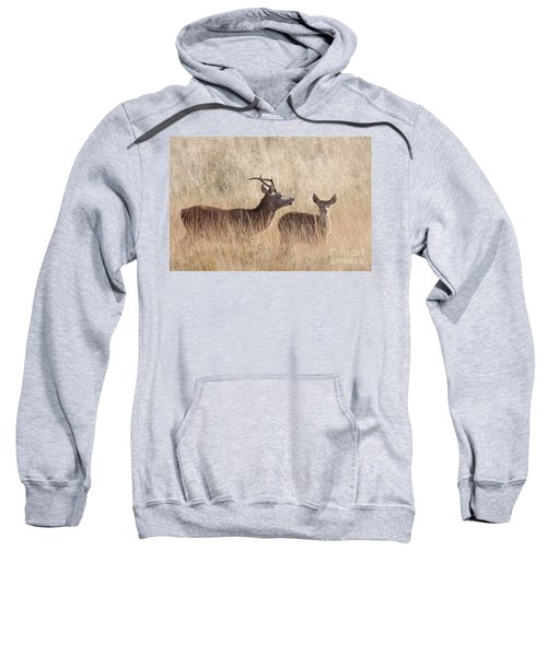Red Deer Stag And Hind Sweatshirt