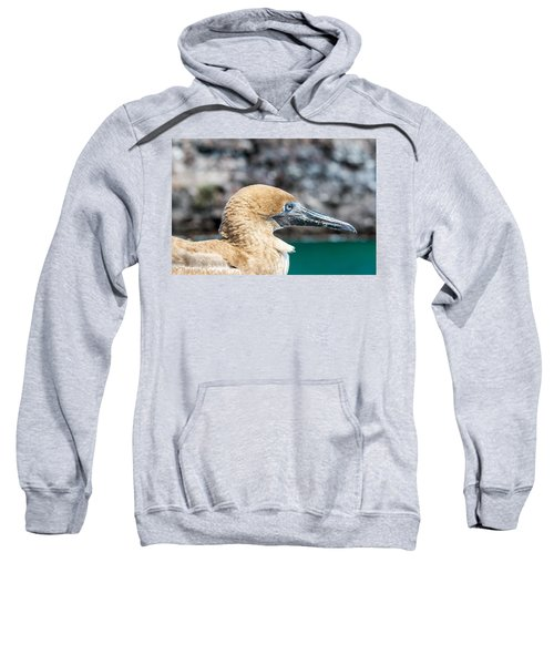 Red Footed Booby Juvenile Sweatshirt by Jess Kraft