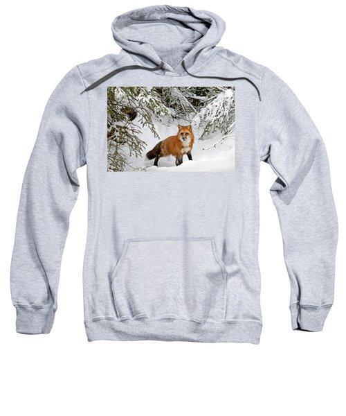 Red Fox In Winter Sweatshirt