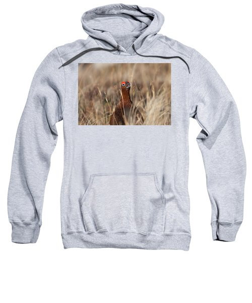 Red Grouse Calling Sweatshirt