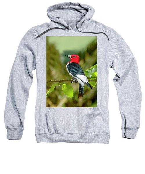 Red-headed Woodpecker Portrait Sweatshirt