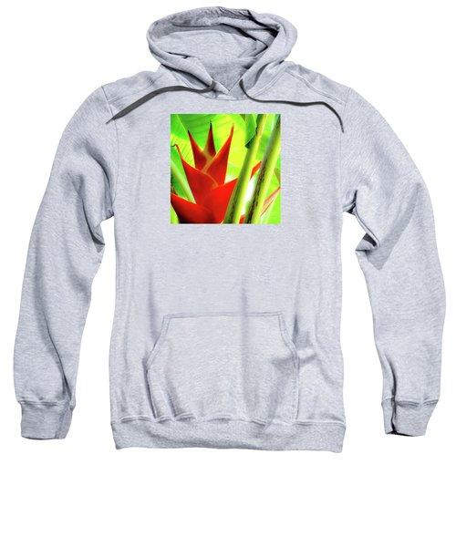 Red Heliconia Plant Sweatshirt