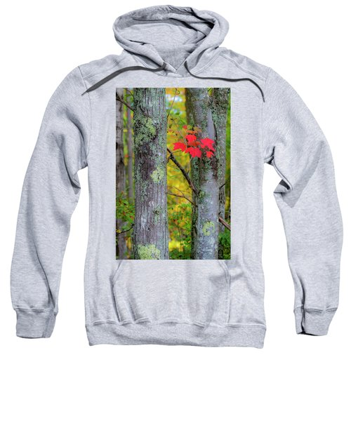 Red Leaves Sweatshirt